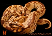 Monarch, Monarch Pastel