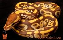 Monarch Mojave