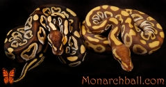 Mojave and Monarch Mojave