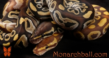 Monarch Mojave & Mojave