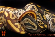 Monarch Mojave, and Mojave