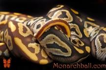 Monarch Mojave, and Mojave