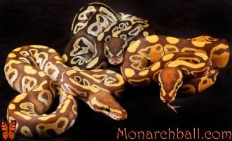 Monarch, Monarch Mojave, Mojave