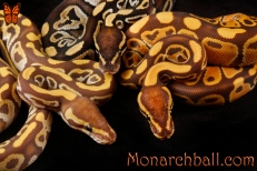 Monarch, Monarch Mojave, and Mojave