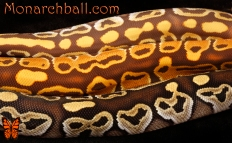 Top down: Monarch Mojave, Monarch, and Mojave